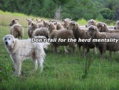 A herd-dog and a herd of sheep